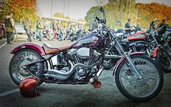 So...   What the hell was that all about? (Harleynik Rides Again.) Tags: bike paint purple helmet harleydavidson moto motorcycle hd softail bikers harleynikridesagain