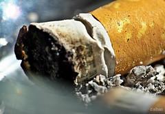 Fumado y aplastado. (Franco DAlbao) Tags: francodalbao dalbao fuji fumar smoking pitillo cigarrillo cigarrette cenizas ashes macro tabaco tobacco aplastado smashed fumado smoked