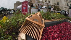 20160916-AMS-LSC-9001 USDA Farmers Market and Ocean Spray Cooperative Cranberry Bog Harvest (USDAgov) Tags: us department agriculture usda farmers market ocean spray agricultural cooperative cranberries washington dc plant creeping evergreen shrub bush longrunning vines berries crimson harvest crane berry craneberry coop