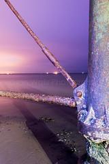 (W4115y) Tags: saltburn seaside nighttime nigh beach twilight pier