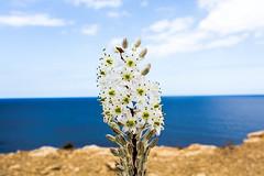 Sea shore flower (bas_312) Tags: canon nature green sea flower saveearth