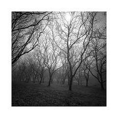 under branches (ArztG.|Photo) Tags: misty moody branches square fine art