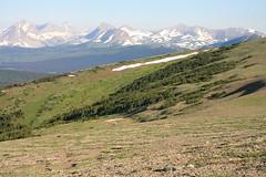 Willmore Wilderness Park (Alberta Parks) Tags: caribou female hoofed mammal rangifertarandus wildlife animal alberta northern rockies mountain wilderness willmore canada ungulate alpine