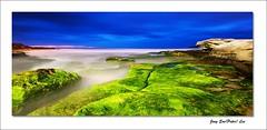 Moss (jongsoolee5610) Tags: seascape maroubra sydney australia moss maroubrabeach sea