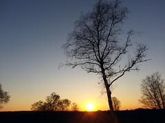 Sunset . (presteza777) Tags: trees sky russia sunset tramonto peterhof serene nature sun