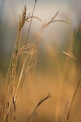 Fall in Stony Creek (g_kutidze) Tags: bokeh grass sun yellow stonycreek fall