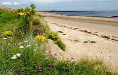 Northumberland July 2012 (geoff.murphy65) Tags: holiday2012 northumbria