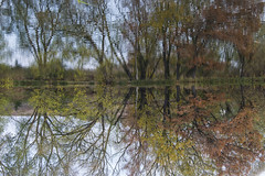 45/52 - Upside Down (stopdead2012) Tags: 52weeksofphotography autumn pond trees reflection water sky outdoors upsidedown