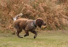 Dog-1019 (Kulama) Tags: dog animals nature walk autumn autumncolours canon7d sigma150600c563