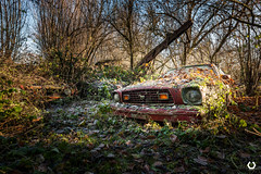 On embrasse les platanes en Ford... (thomascaryn.com) Tags: belgien belgique belgium continent europe exploration explorationurbaine ford fordmustang lignumbeetleum marque moyendetransport transport urbex abandoned aufgegeben auto automobile brand car decay derelict dust dusty explore forgotten friche lost old place rotten rust rusty verlassen voertuig voiture wagen oublié poussière abandonné