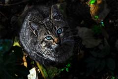 innocent cat (Emre A) Tags: canon 100d cat animal hayvan kedi sirin cute portrait