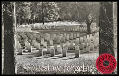 Remembrance Day 2016 (R~P~M) Tags: poppy remembrance armistice war hero dead radiohead harrypatch 2016 england uk unitedkingdom greatbritain
