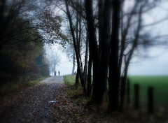 HFF.... (SpitMcGee) Tags: hff happyfencefriday zaun waldweg spaziergnger november neblig herbst venwegen stolbergrheinl nrw germany spitmcgee explore 32