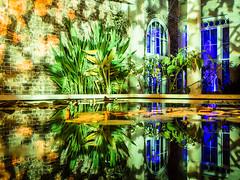 Watered Down (Sean Batten) Tags: brentford england unitedkingdom gb syonpark water reflection nikon df 35mm enchantedwoodland