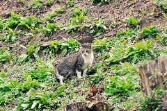 Today's Cat@2016-11-11 (masatsu) Tags: cat thebiggestgroupwithonlycats catspotting pentax mx1