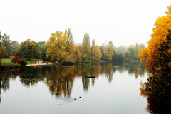 Autumn on the river (Katrinitsa) Tags: london2016 london autumn river hyde hydepark park reflections water fog landscape nature uk greatbritain england europe morning calm quiet beauty beautiful awesome amazing colors red orange green brown canon canoneosrebelt3i ef35mmf14lusm outdoors riverside ducks riverview vivid vibrant perfect
