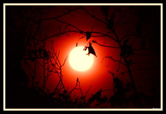 Alternative view (TrishaM56) Tags: red trees light silhouette moon night supermoon supermoon2016 nikon d3100
