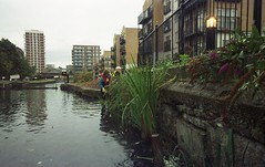 Regents canal, reed beds 4 (Tea, two sugars) Tags: film kodak sport waterproof kodaksportwaterproof singleuse lowerregentscoalition lower regents coalition expired