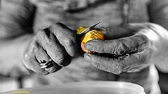Skinned (Facebook : photographe.maximepateau) Tags: skined main mains hand hands mano manos mani hnde movement mouvement moving photo picture photography photographie foto fotografa dsaturation partielle despar nb bw couleur color potatoe patate vegetable lgume cuisine cuisiner cooking cook kitchen couteau knife maxime pateau
