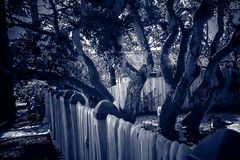 blue dreams are made of this (benderbom) Tags: surreal blue fence tree landscape carmelbythesea blackwhite tone