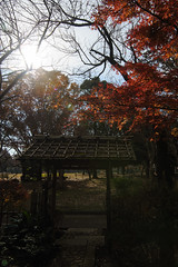 20161204-DS7_6523.jpg (d3_plus) Tags:  a05 wideangle d700 thesedays  architecturalstructure   kanagawapref   sky park autumnfoliage  japan   autumn superwideangle dailyphoto nikon tamronspaf1735mmf284dild  street daily  architectural  fall tamronspaf1735mmf284dildaspherical touring streetphoto  nikond700 tamronspaf1735mmf284 scenery building nature   tamron1735   tamronspaf1735mmf284dildasphericalif   autumnleaves