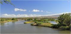 Hawaii....Different (kcezary) Tags: kealiapondnationalwildliferefuge maui hawaii places eosm canon