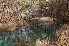 Reflection ! (Parmanand Sharma) Tags: fukushima tohoku japan nature bandai trees winter reflection autumn