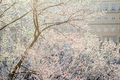 Erster Schnee (UsualRedAnt) Tags: berlin schnee deutschland baum winter karlmarxallee wasser f28 pflanze canon natur friedrichshain ef50mmf14usm germany