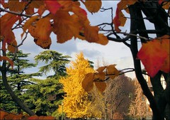 Watercolour... (mau_tweety) Tags: autumn autunno tree albero foglie leaves rami branches colours yellow green orange giallo verde arancione verona veneto italy italia