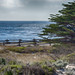 one perfect sea (nosha) Tags: ocean california blue sea usa seascape green beautiful beauty pacific horizon pacificgrove asilomar nosha