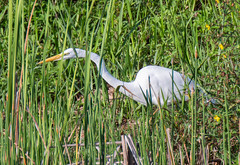 20150903-_74P6259.jpg (Lake Worth) Tags: bird nature birds animal animals canon butterfly wings florida outdoor wildlife feathers butterflies wetlands everglades waterbirds southflorida 2xextender sigma120300f28dgoshsmsports
