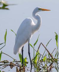 20150909-_74P7438.jpg (Lake Worth) Tags: bird nature birds animal animals canon wings florida outdoor wildlife feathers wetlands everglades waterbirds southflorida 2xextender sigma120300f28dgoshsmsports