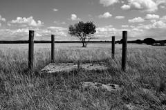 4 + 1 (Lichtabfall) Tags: blackandwhite bw tree monochrome clouds landscape blackwhite 4 wiese wolken sw gras schwarzweiss landschaft baum vier strauch pfosten schneverdingen campreinsehlen reinsehlen