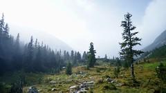 Valea Stanisoarei, iesirea din padure (Sorin Sfrlogea) Tags: retezat montaniard