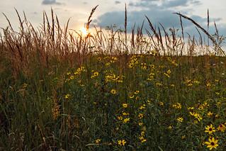 End of August Prairie