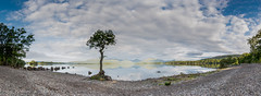 Lone tree at Millarochy Bay, Loch Lomond (npinks) Tags: mountains water reflections scotland scenic grand panoramic vista loch lochlomond lonetree millarochybay