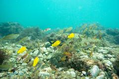 20150926-DSC_6311.jpg (d3_plus) Tags: sea sky fish beach japan scenery underwater diving snorkeling  shizuoka    apnea izu j4           nikon1 togai  1030mm nakagi  1   1030mmpd wpn3