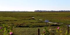 Baie de Somme  (34) - les prs-sals (roland dumont-renard) Tags: picardie baie prssals somme baiedesomme cayeuxsurmer lecrotoy lehourdel ctepicarde pointeduhourdel baschamps