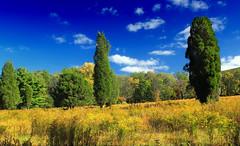 Anglų lietuvių žodynas. Žodis meadow goldenrod reiškia pieva rykštenių lietuviškai.