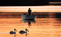 Best time to go fishing apparently! (Merrillie) Tags: pink pelicans nature water birds animals fauna sunrise reflections photography bay boat fishing fisherman nikon scenery waterfront wildlife australia coolpix brisbanewater woywoy p600 nswcentralcoastnsw centralcoastnsw