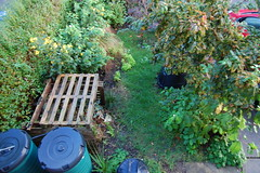 Looking Down on the Front Garden - October 2015 (basswulf) Tags: uk autumn england fall garden unmodified lenstagged oxford compost pallet 32 1855mmf3556g frontgarden compostbin d40 3008x2000 permissions:licence=c image:ratio=32 201510 normcres lookingdownonthegarden 20151006
