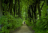 people which i love (ellevalenok_photography) Tags: green girl leaves forest moscow kuskovo ilovegreen