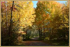 <><><> Happy Fall Trail <><><> (Wolverine09J ~ 1 Million + Views) Tags: nature minnesota landscape parkreserve naturescreations certifiedphotographergroup batslair frameit~level01 elmcreekfall peakcoloration autumntrailing trailtones