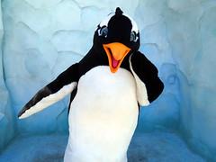 Puck (meeko_) Tags: penguin orlando florida antarctica characters puck seaworld themepark seaworldorlando seaofice seaworldcharacters antarcticaempireofthepenguin shamuandcrew