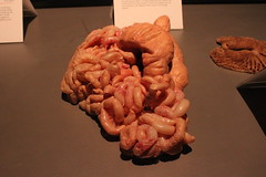 Science World - October 15, 2015 (rieserrano) Tags: bodyworlds intestines plastination