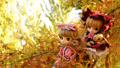 Wieder zusammen~ | Pullip Shinku of Kumo and Dal Hinaichigo (Iriem~) Tags: park parque autumn anime toy doll manga dal otoño pullip rozen maiden juguete shinku träumend hinaichigo kumomilk iriem