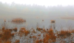 foggy fen (enlarge for misty details) (HansHolt) Tags: autumn trees mist lake reflection fall water netherlands fog canon landscape island bomen meer herfst fen ven drenthe eiland waterscape 6d weerspiegeling reflectie canonef24105mmf4lisusm echten moorgrass purplemoorgrass moliniacaerulea pijpenstrootje canoneos6d bovenveen