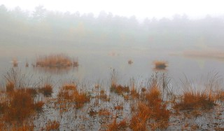 foggy fen (enlarge for misty details)