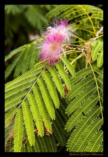 Botanicactus II