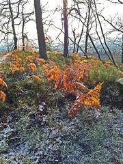 Winterspaziergang Mörschieder Burr_0011_bearbeitet-1 (AndreasHerbert) Tags: nationalpark wanderungen mörschied winterspaziergangmörschiederburr mörschiederburr